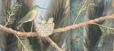 Broad-tailed Hummingbirds and Pine Elfin