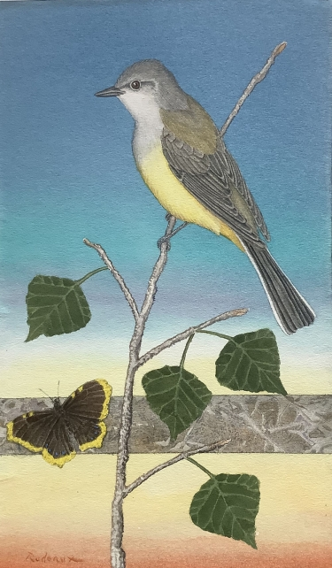 Western Kingbird and Mourning Cloak